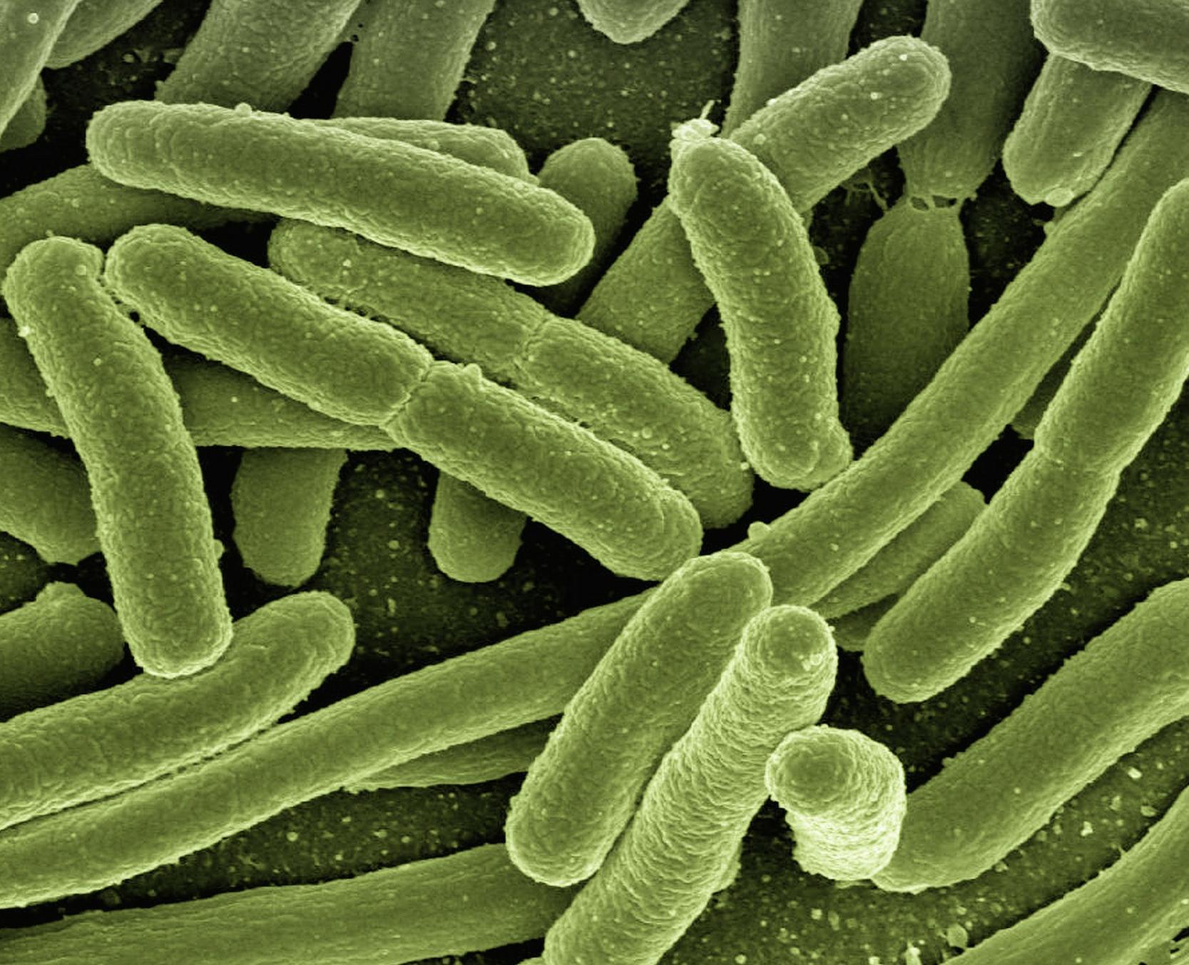 Jakie korzyści przynosi stosowanie probiotyków?