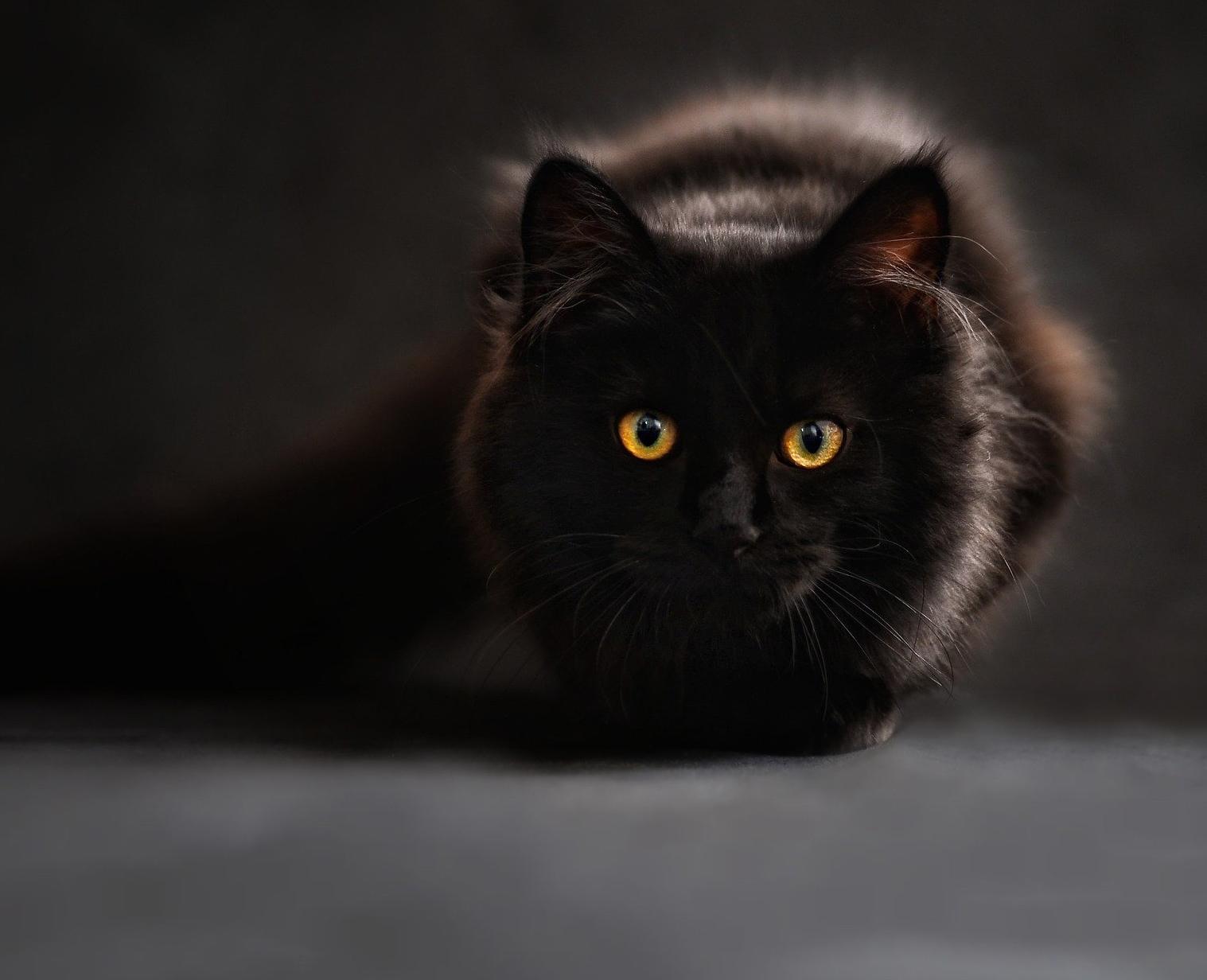 Jakimi chorobami możemy się zarazić od kota?